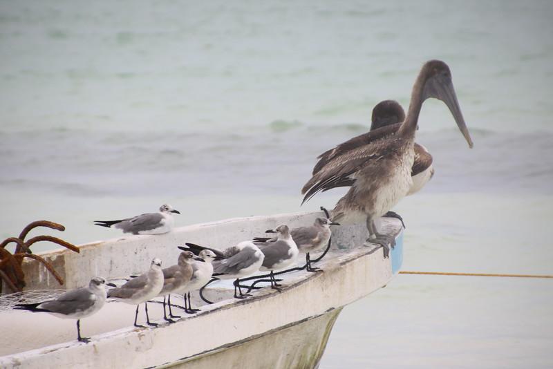 Holbox Island, Mexico  Feb2016 149.JPG