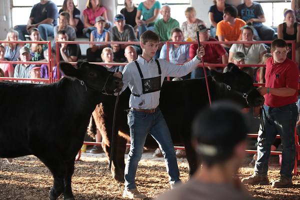 2017 Steer Show