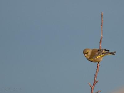 Birds 2014