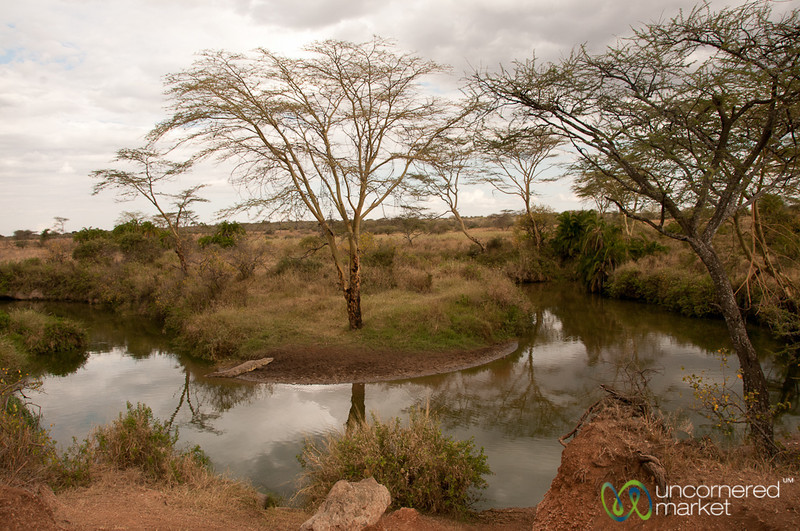 Crocodile at Watering Hole - Serengeti, Tanzania