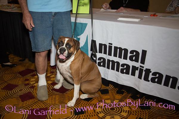 Animal Samaritans Men of the Desert Fashion Show 12/3/17