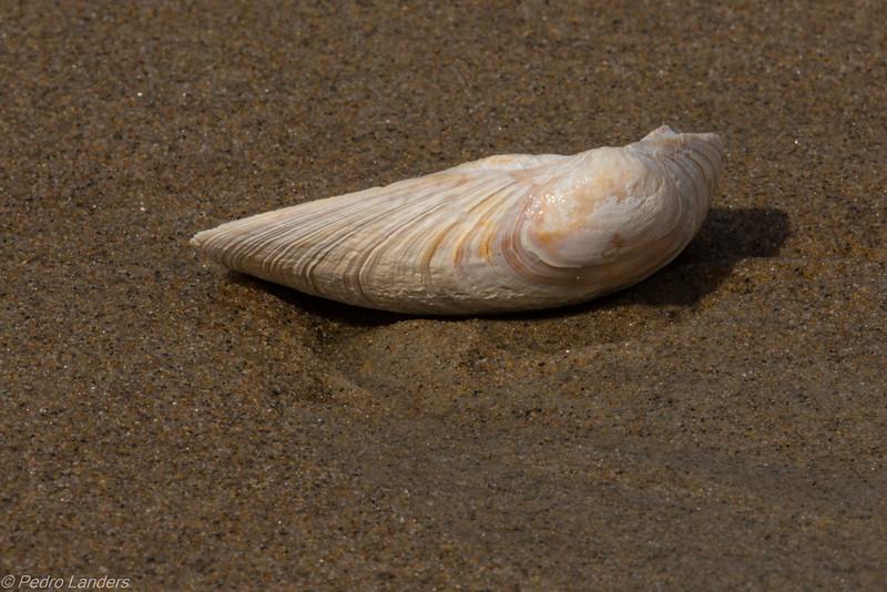 Plum Island Beach Detail