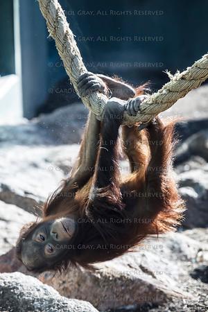 Primate Gallery