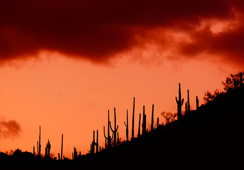 Arizona Scenics-5.jpg