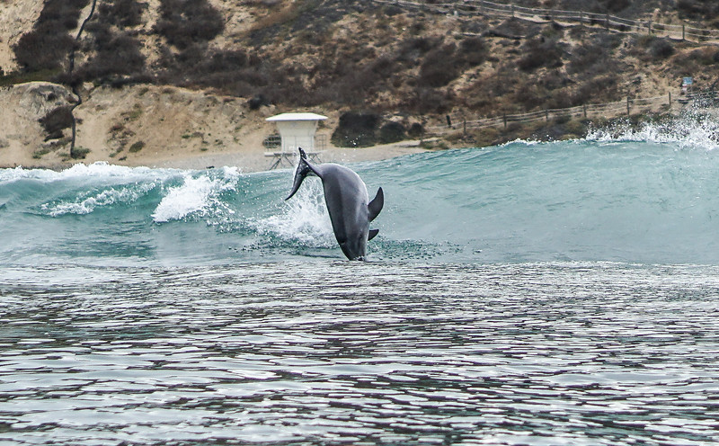 Beacons dolphins-22.jpg