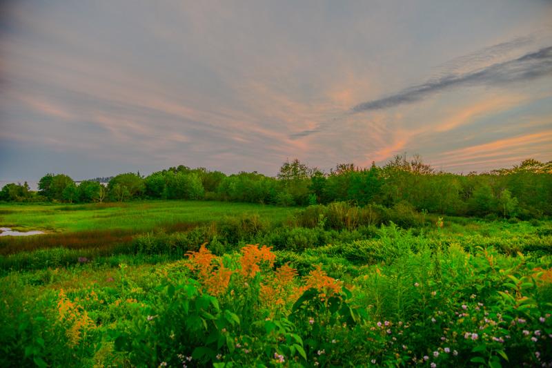 Maine Green 26