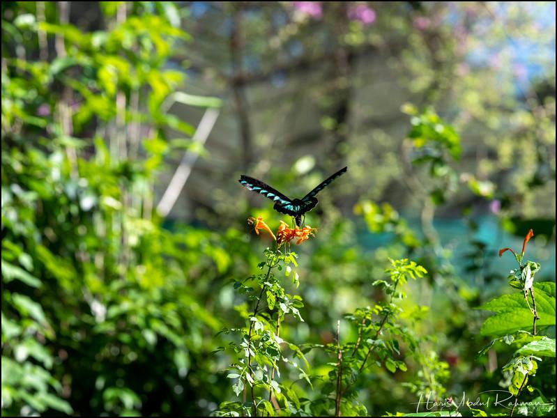200104 KL Butterfly Park 27.jpg