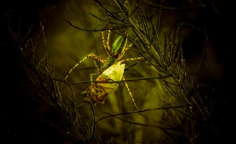 Spiders-Arachnids-046.jpg