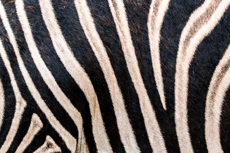 Wildlife Ranch-0456.jpg