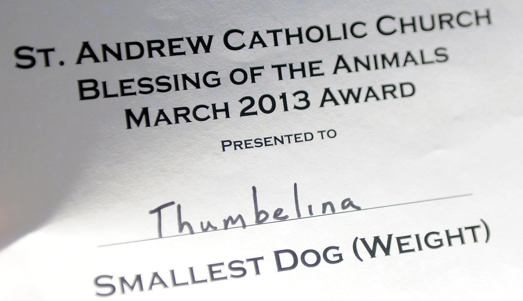 ". ""Thumbelina\"" won the award for smallest dog during the traditional Blessing of the Animals at St Andrew Church School on Saturday, March 30, 2013 in Pasadena, Calif. 