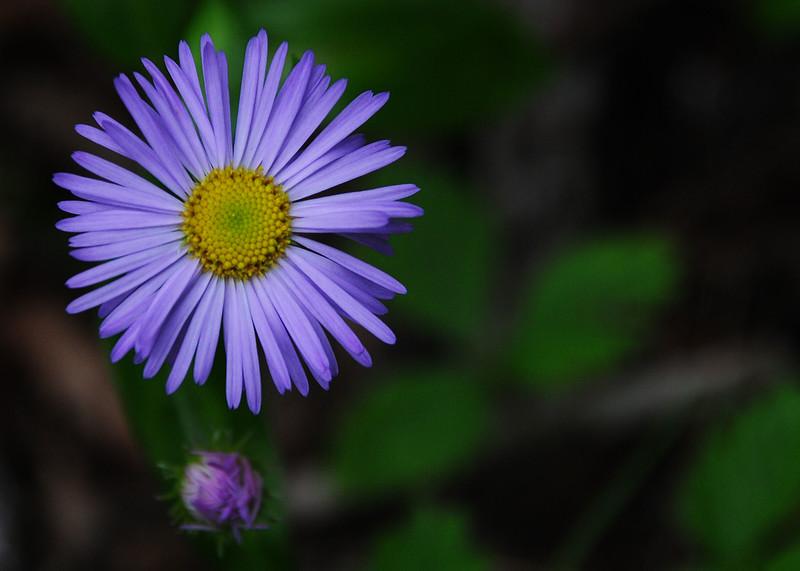 NEA_3079-7x5-Flower.jpg