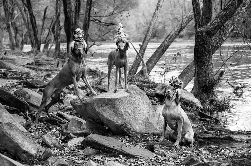 3 Dogs Rock-2BW.jpg