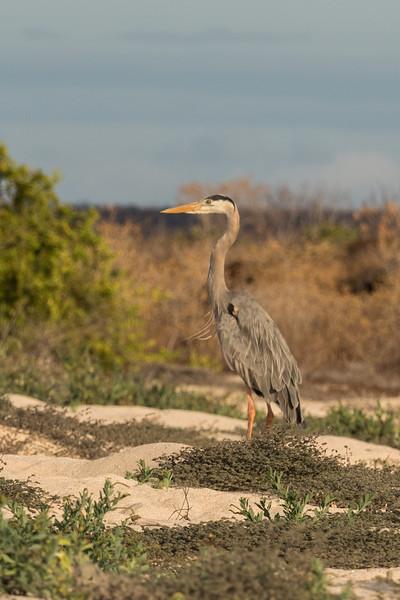 Galapagos-Best-012.jpg