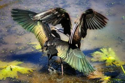 BIRDS, ANIMALS & PLANTS