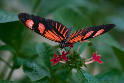 Hershey Butterfly Garden