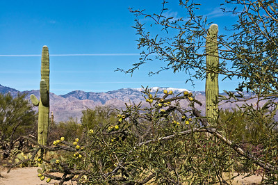 2012 A Tucson Sampler - Sights from a few of its Natural, Cultural, and Historical Treasures