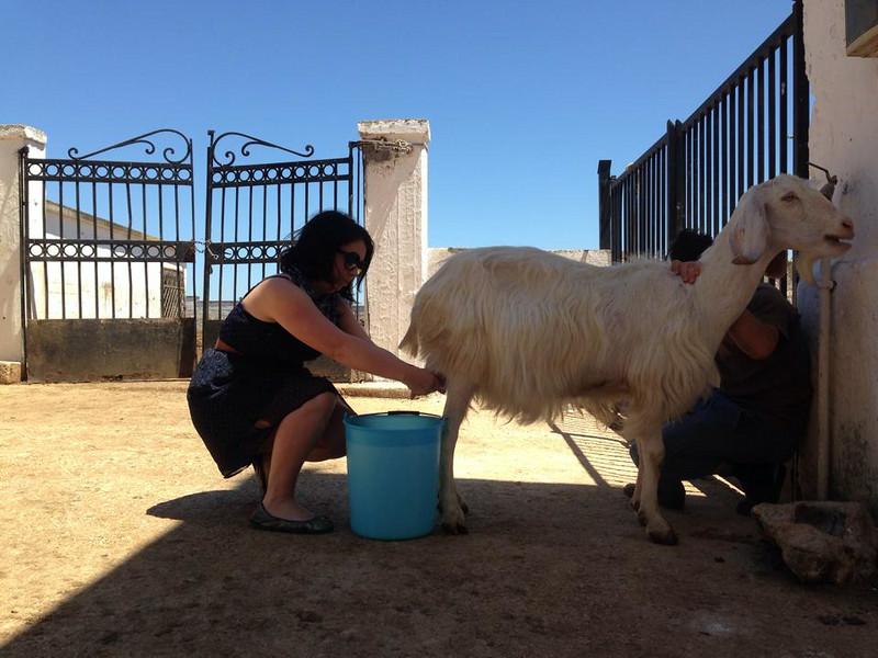 me milking goat.jpg