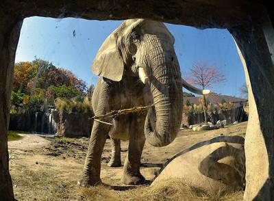 Cleveland Zoo - 10-21-12