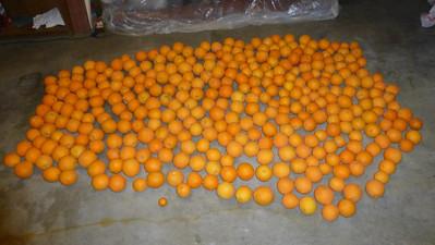2013/01/10 >> 347 Oranges