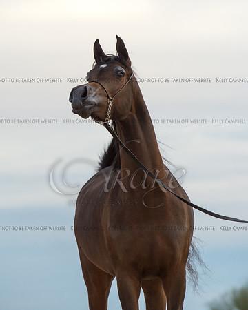 Culbreth Equine