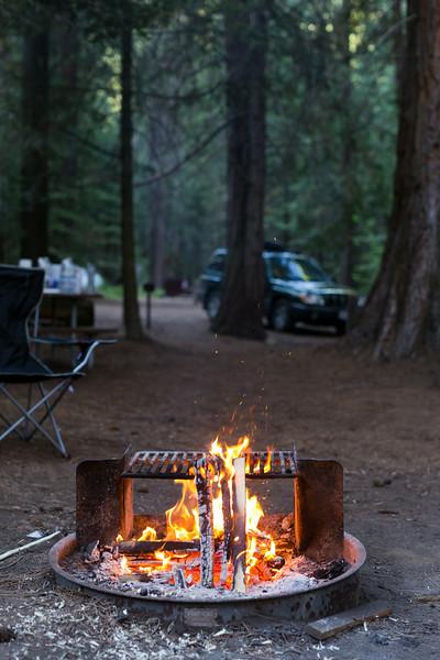 Sequoia_0714.jpg