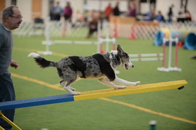York County DTC AKC Agility Trial March 13-15