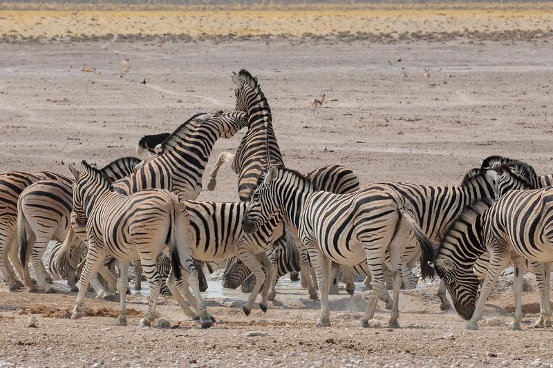 Namibia 69A9186.jpg