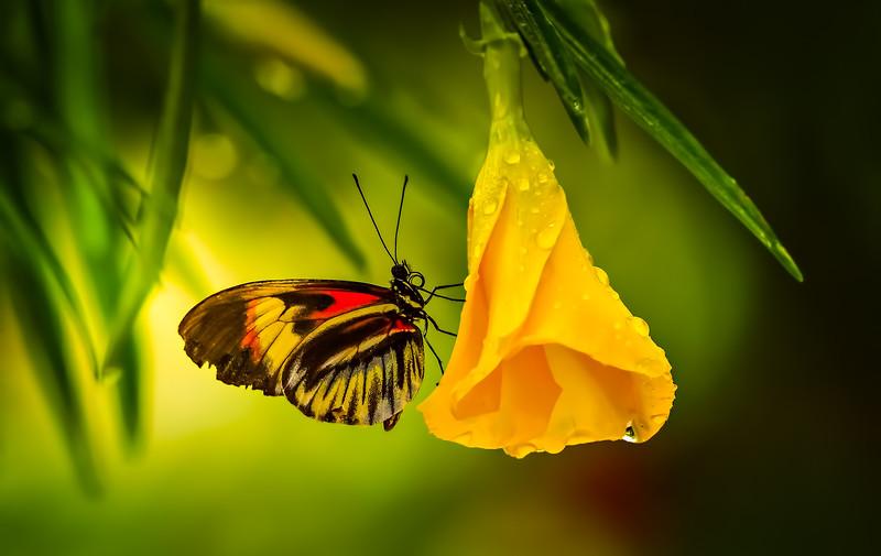 Butterfly-053.jpg