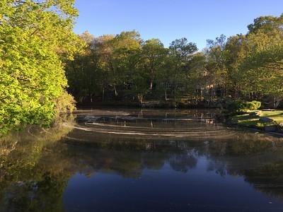 05-16-17 Centerbrook Pond