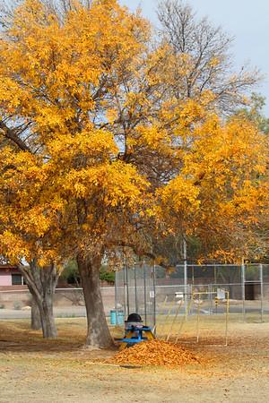 2019 Rio Vista Leaves