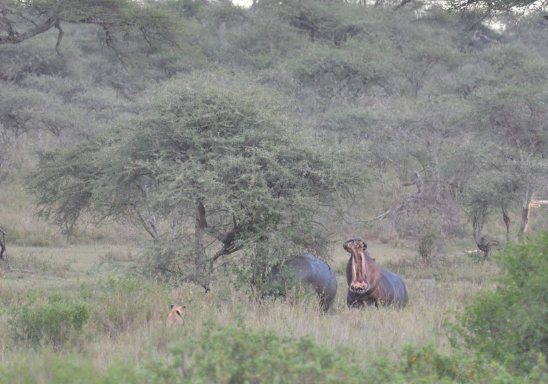 East Africa Safari 292.jpg