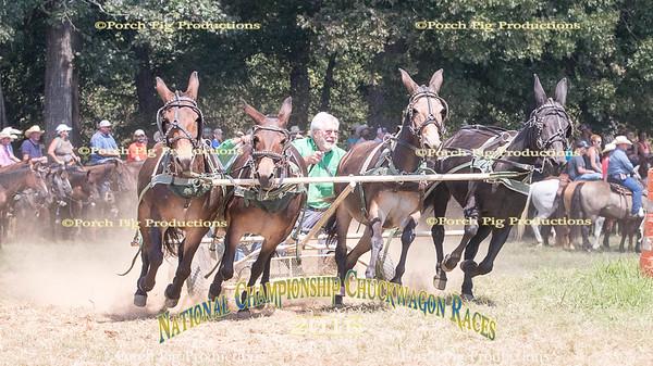 Saturday 4 Up Mules  2016 National Championship Chuckwagon Races