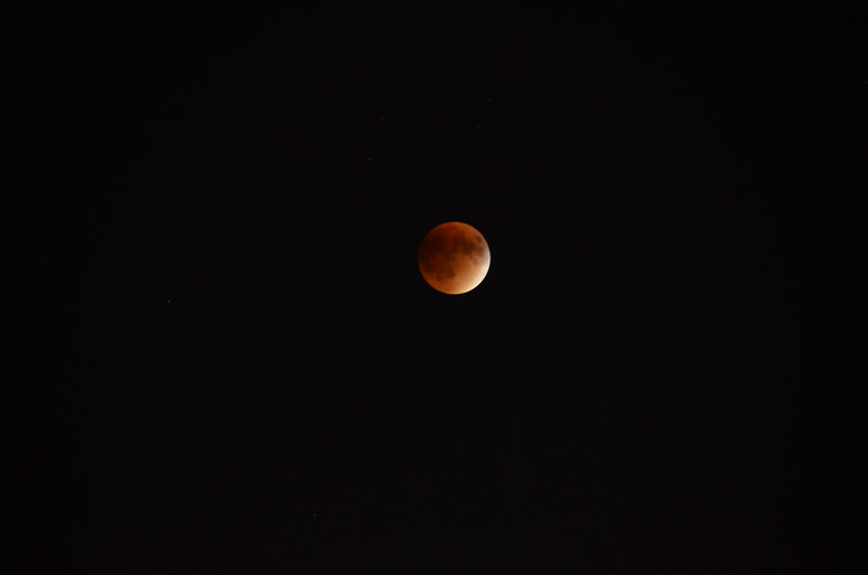 Blood moon. Palatine, Illinois