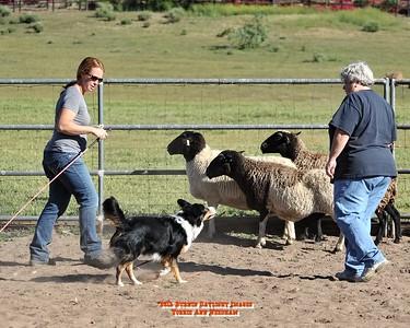 3/24/16 Liz Palika/Bones (Herding Class)