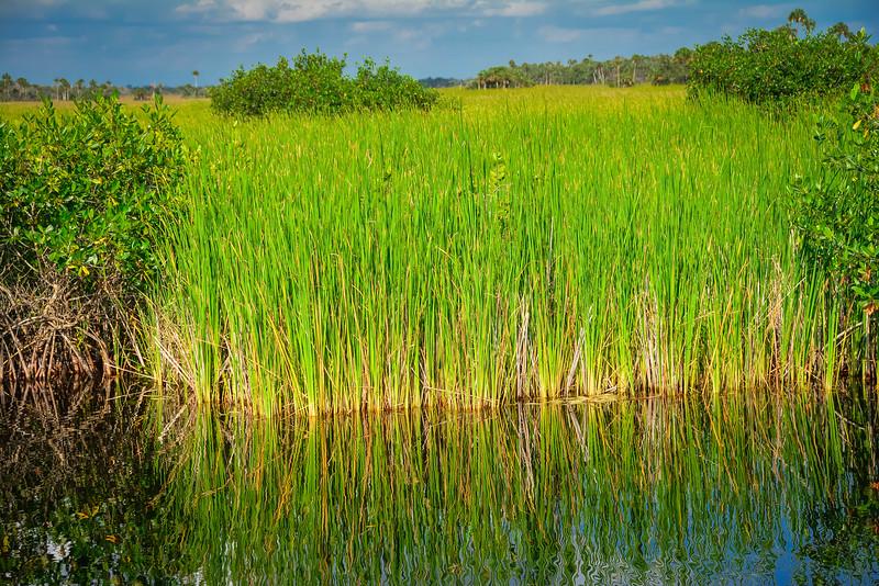 Everglades-44.jpg