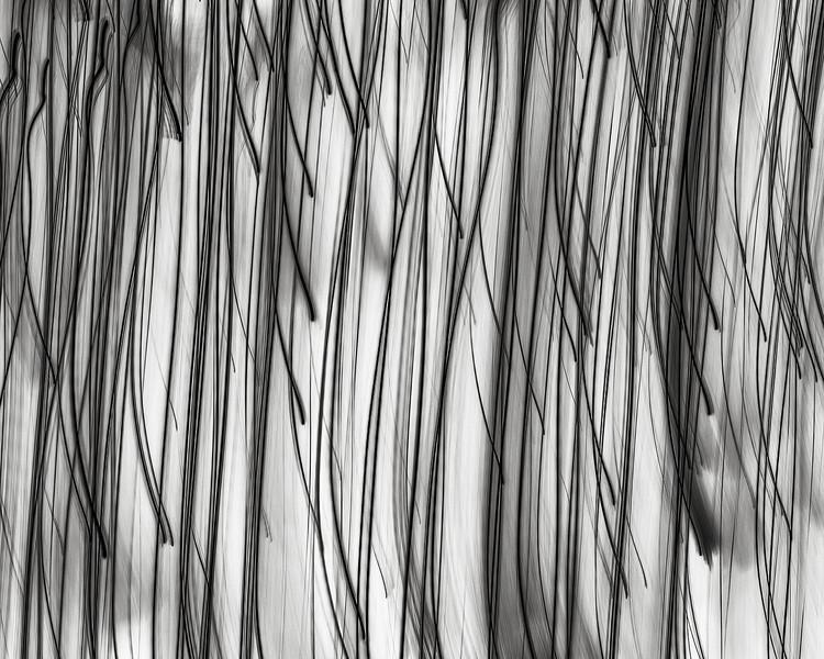 Nerve series no. 13