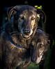 RescuedogsCanon_EOS_5D_Mark_III-2742-Modifica
