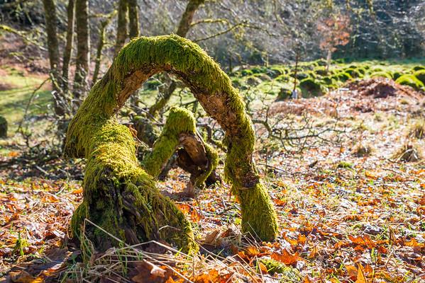 Logs on the woodland floor
