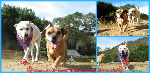 Summer Doggie Fun 06/9-10/15