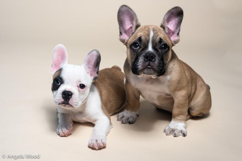 Puppies61.jpg