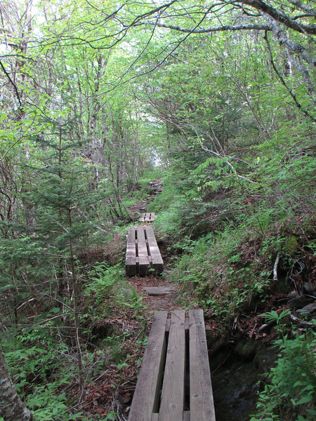 Mountains-to-Sea Trail (5,680')