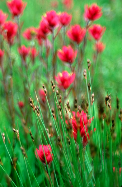 amh FLOWERS (1263).jpg
