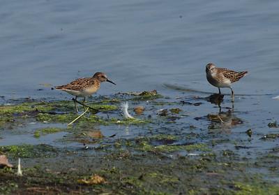 Jamaica Bay Wildlife Refuge Birds