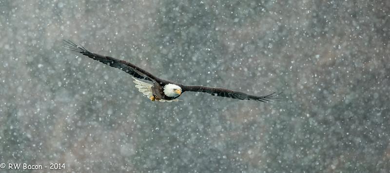Homer - Eagle Snow Storm.jpg