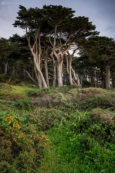20170201_SAN_FRANCISCO (21 of 24)