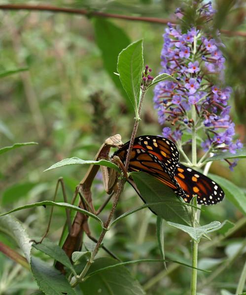 Western North Carolina Nature Center, Asheville, NC