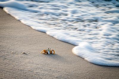 Ghost Crab on Johnson Beach