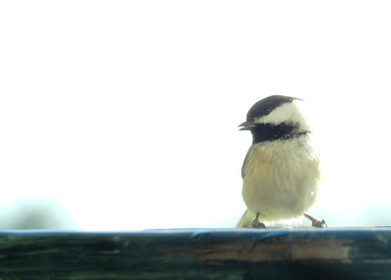 birds (123).JPG