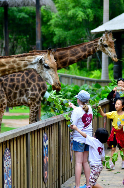 Tage and Tessa fed the giraffes