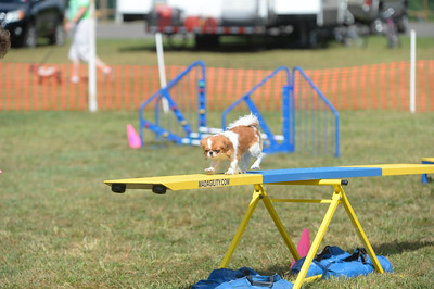 German Shepherd Dog Club AKC Agility Trial September 24-25